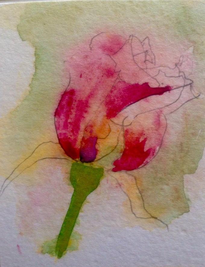 Rose, watercolour, 15 x 11 cm