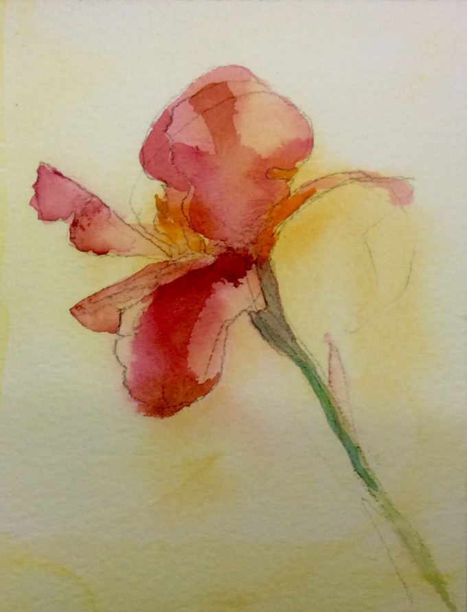 Iris, Watercolour, 22 X11 cm