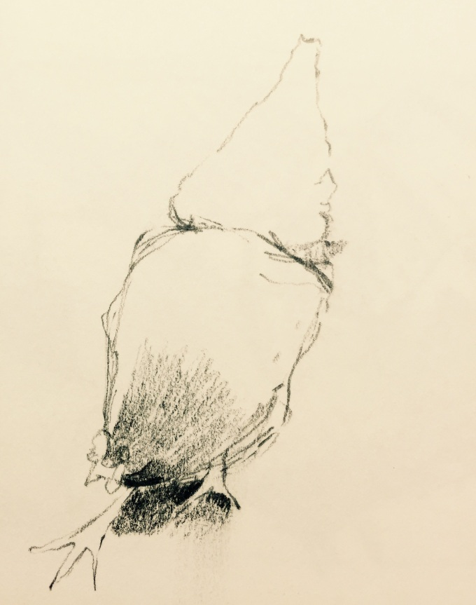 A Scratch, graphite on paper, 12 x18 cm