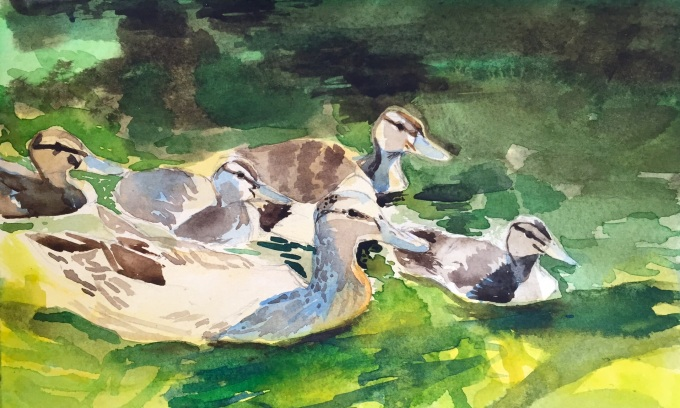 Ducks in the Sun, Watercolour, 22 x 11 cm