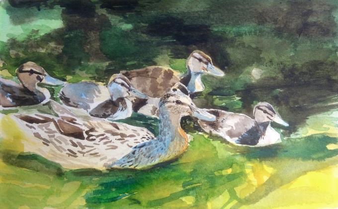 Mallard and Ducklings, Watercolour, 17 x22cm