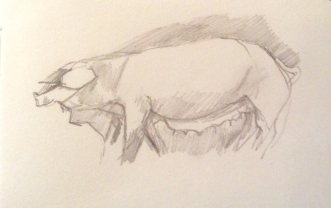 Pig, graphite on paper, 12 x 5 cm